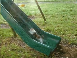 go dog run -dog runs in oppositive direction of slippery slide