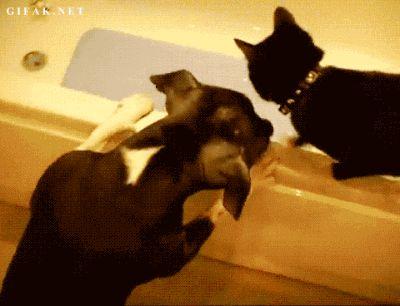 dog drop cat friend off