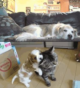 cat loves cat and dogs loves cat