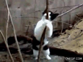 cat lap dance