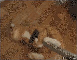 sweep the floor with a cat on